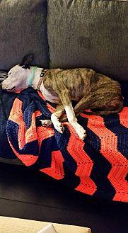 Hound (Unknown Type)/Pointer Mix Dog for adoption in Jacksonville, Florida - Jason