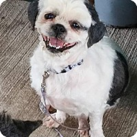 Adopt A Pet :: Camilla - Fairfield, OH