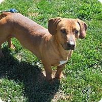 Adopt A Pet :: Tater Tot - Anaheim, CA