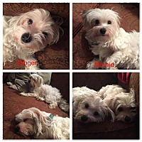 Adopt A Pet :: Ginger & Minnie - Warner Robins, GA