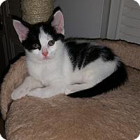 Adopt A Pet :: Pickles - Turnersville, NJ