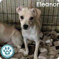 Adopt A Pet :: Eleanor - Kimberton, PA