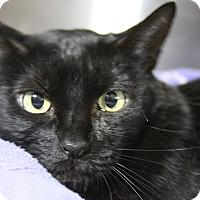 Adopt A Pet :: Baby Beama - Sarasota, FL