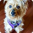 Adopt A Pet :: RAVEN