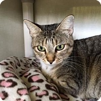 Adopt A Pet :: Dory - Fort Collins, CO