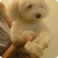 Adopt A Pet :: Freddie - Alpharetta, GA
