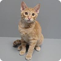 Adopt A Pet :: Spark - Seguin, TX