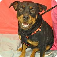 Adopt A Pet :: Roxy - Irmo, SC