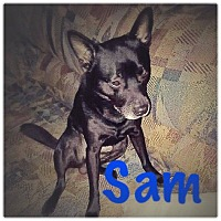 Terrier (Unknown Type, Small) Mix Dog for adoption in Richmond, Virginia - SAM