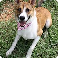 Adopt A Pet :: Vanna - Norman, OK