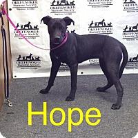 Labrador Retriever Dog for adoption in Waycross, Georgia - Hope