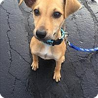 Adopt A Pet :: Jordan - Hainesville, IL