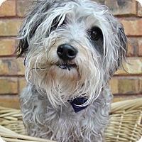 Adopt A Pet :: Trunx - Benbrook, TX