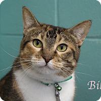 Adopt A Pet :: Bibby - Bradenton, FL