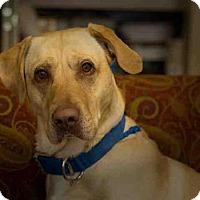 Adopt A Pet :: BUTTERBEAN - Frisco, CO