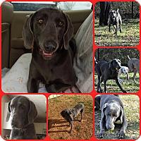 Adopt A Pet :: Anya - Inverness, FL