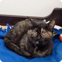 Adopt A Pet :: Catalina - St. Paul, MN