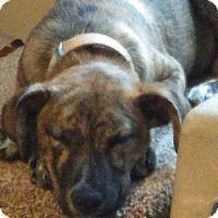 Adopt A Pet :: Lizzy - Davenport, IA