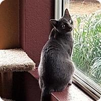 Adopt A Pet :: Galina - Encinitas, CA