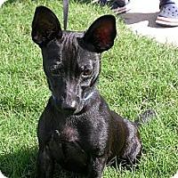Adopt A Pet :: Murphy - Waller, TX