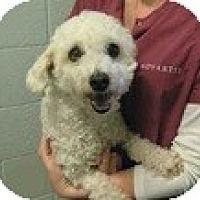 Adopt A Pet :: Bubbles - URGENT - Seattle, WA