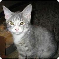 Adopt A Pet :: Cutie - Phoenix, AZ