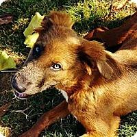 Adopt A Pet :: Maggie - Austin, AR