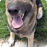 Adopt A Pet :: Serenity - Oakley, CA