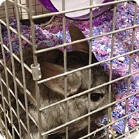 Adopt A Pet :: Cocoa - Granby, CT
