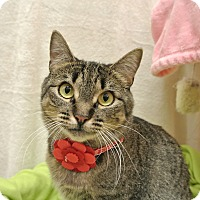 Adopt A Pet :: Olivia - Foothill Ranch, CA