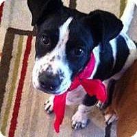 Adopt A Pet :: Mya - Marlton, NJ