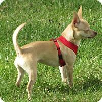 Adopt A Pet :: Jackson - Elkhart, IN