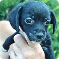 Adopt A Pet :: Clayton - Phoenix, AZ