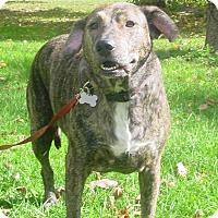 Adopt A Pet :: Rosabelle - Davison, MI