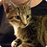 Adopt A Pet :: Dulles - Merrifield, VA