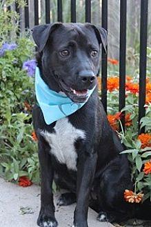 Corgi Mix Dog for adoption in Yukon, Oklahoma - Katrina