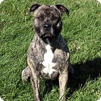Adopt A Pet :: TRYTEN - New Cumberland, WV