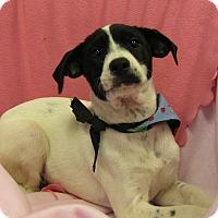 Adopt A Pet :: Rowen - Charlemont, MA