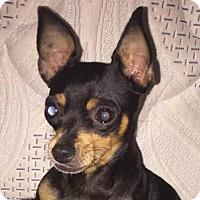 Adopt A Pet :: Destiny - Fort Lauderdale, FL