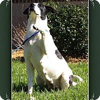 Adopt A Pet :: Noelle - Elizabethton, TN