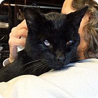 Adopt A Pet :: River - Lombard, IL