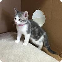 Adopt A Pet :: Sadie - Pleasant Hill, CA