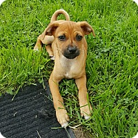 Adopt A Pet :: Adley - New Oxford, PA