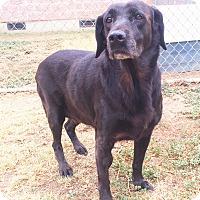 Adopt A Pet :: Nanna - Watauga, TX