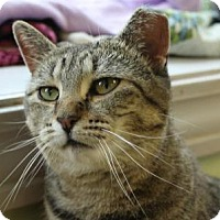 Adopt A Pet :: Francine - Indianapolis, IN