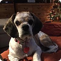 Adopt A Pet :: Ellie - Austin, TX