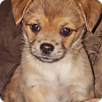 Adopt A Pet :: North - Tenafly, NJ