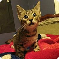 Adopt A Pet :: JUANITA - Hampton, VA