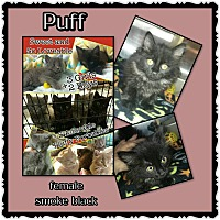 Adopt A Pet :: Puff - Richmond, CA