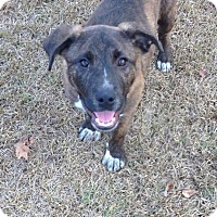 Adopt A Pet :: Brendan - Blountstown, FL